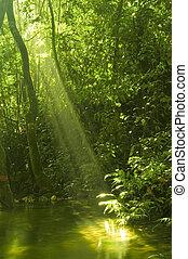 woda odbicie, las, zielony