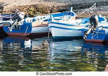 woden, łódka