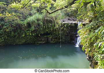 wodospady, maui, hawajczyk, rainforest
