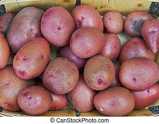 wole, czerwony, nowe kartofle