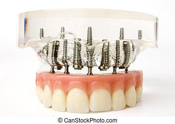 wpajać, wzór, zęby