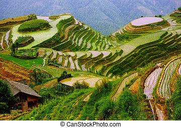 wspinaczka, yunnan, ryż, porcelana, tarasy