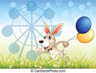 wyścigi, balony, ogród, królik