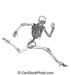 wyścigi, szkielet, ludzki