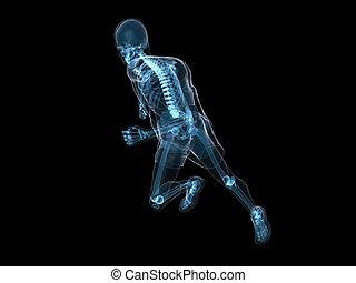 wyścigi, szkielet