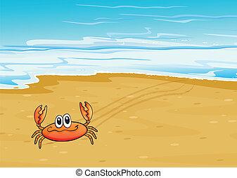 wybrzeże, krab, pełzając