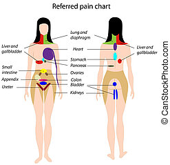 wykres, ból, eps8, referred