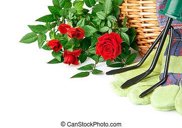 wyposażenie, kwiaty, ogród, róża