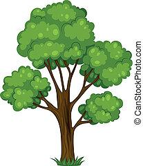 wysoki, drzewo