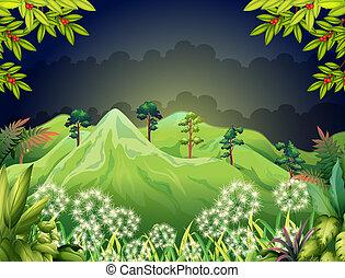 wysokie góry, ciemny, las