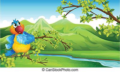 wysokie góry, papuga, przód