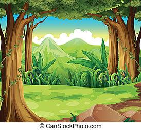 wysokie góry, zielony las, wszerz