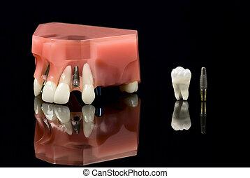 wzór, filozofia, wpajać, ząb, zęby