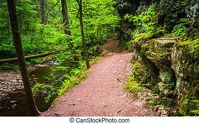 wzdłuż, stan, ricketts, pennsylvania., ciągnąć, park, dolina górska, potok