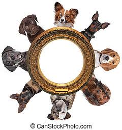 złoty, grupa, dookoła, obraz, portrety, ułożyć, pies, okrągły