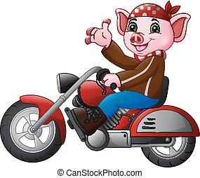 zabawny, rysunek, motocykl, jeżdżenie, świnia