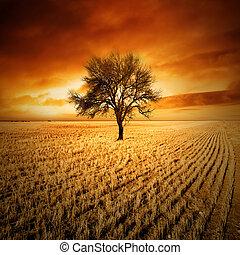 zachód słońca, drzewo