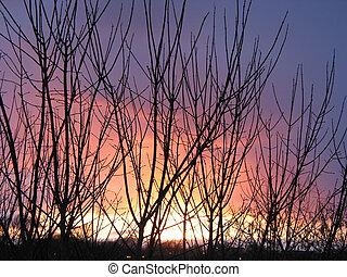 zachód słońca, przez, zima drzewa