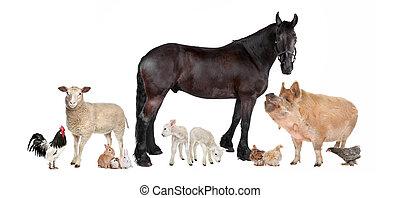 zagroda, grupa, zwierzęta