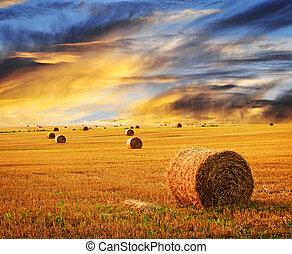 zagroda, złoty, na, zachód słońca pole