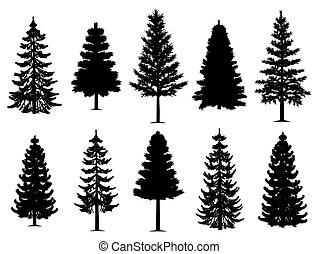 zbiór, drzewa, jodła, sosna