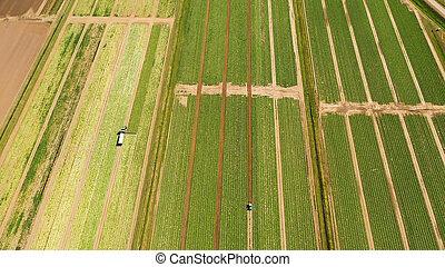 zbiory, rolniczy, ziemia, zielony, nad