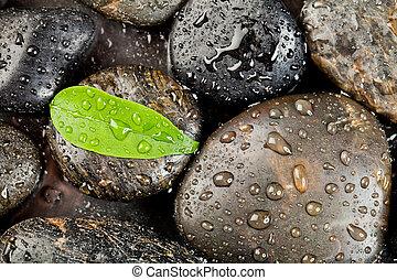 zen, freshplant, kamienie, krople, woda