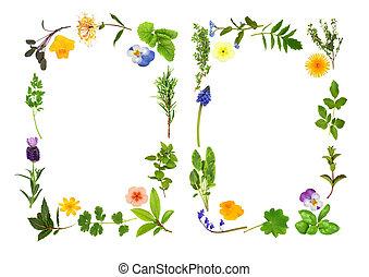 ziele, brzegi, kwiat, liść