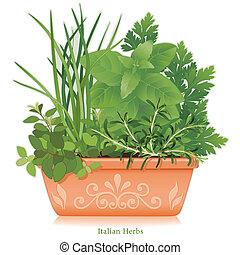 ziele, glina, ogród, doniczka, włoski