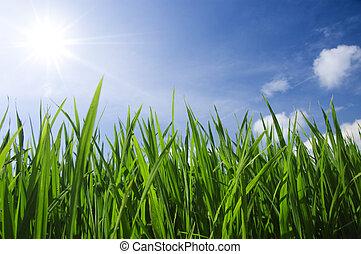 zielona trawa, niebo