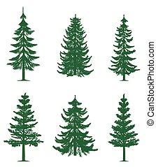 zielone drzewa, zbiór, sosna