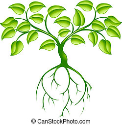 zielone drzewo, podstawy
