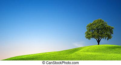 zielone drzewo, zachód słońca