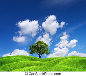 zielony krajobraz, natura
