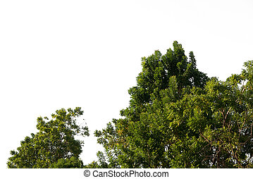 zielony, krzak, trawa, soczysty, ogród