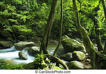 zielony las, potok