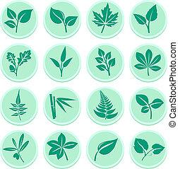 zielony, liście, ikony