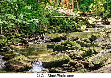 zielony, mech, potok, trzęsie się