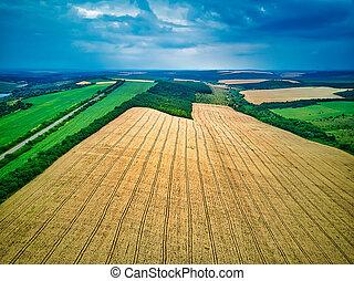 zielony, prospekt, żniwa, przed, lato, pola, antena