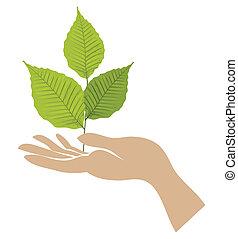 zielony, ręka., wektor, liść