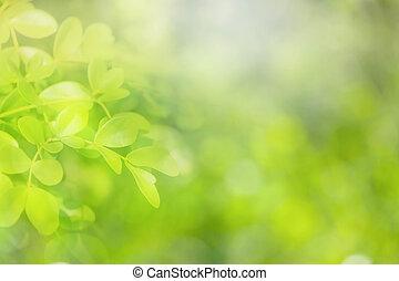 zielony, tło., kasownik, miękkie ognisko
