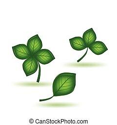 zielony, wektor, komplet, leaf.