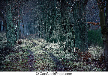 zima, drzewa., zmarły, ciemny, między, ścieżka