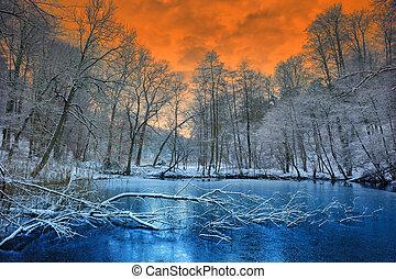 zima, popisowy, na, zachód słońca, las, pomarańcza