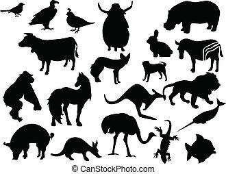 zwierzęta farbują, stuknięcie, czarnoskóry, silhouettes., jeden, zmiana, wektor