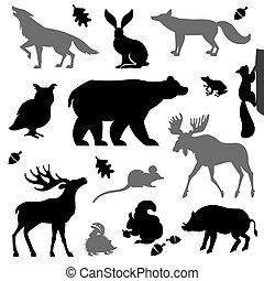 zwierzęta, forest., europejczyk, żyjący