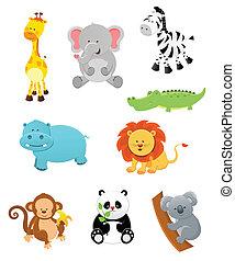 zwierzęta, safari