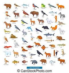 zwierzęta, zbiór, europa
