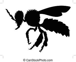 zwykły, pszczoła, widok budynku